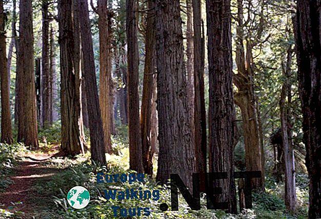 Откријте Ендор у Националном парку Редвоод у Калифорнији
