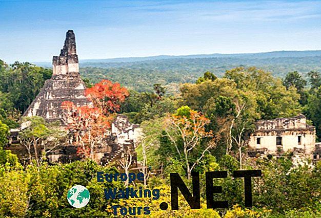 Découvrez les secrets des ruines de Tikal