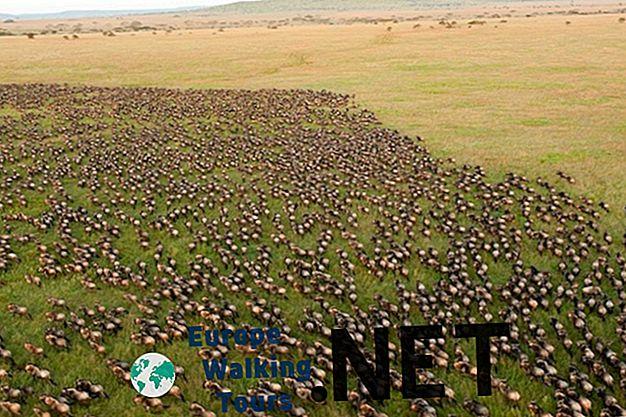 12 najkrajších národných parkov v Tanzánii