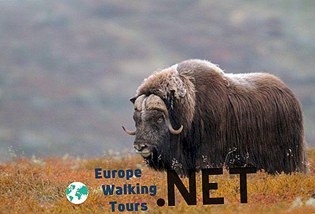 10 най-красиви национални парка в Норвегия