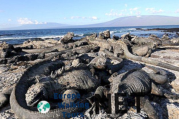 6 razloga za vožnju na otocima Galapagos